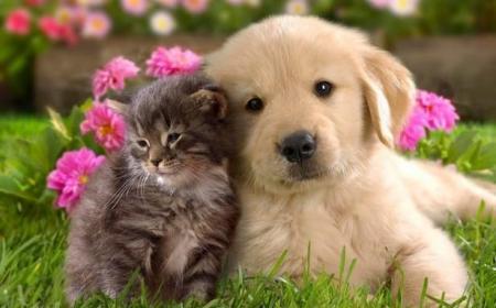 Por qué el 29 de abril se celebra el Día del Animal